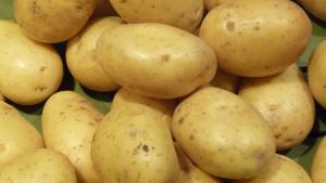 Papas de la variedad Monalisa, ovaladas y de piel y carne de un color amarillo claro.